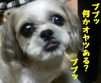 2008083121370001.jpg