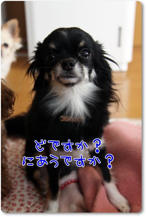 028_20110123181456.jpg