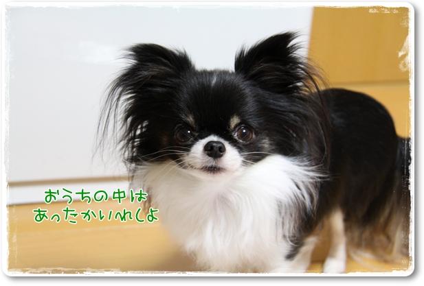 033_20110114222608.jpg