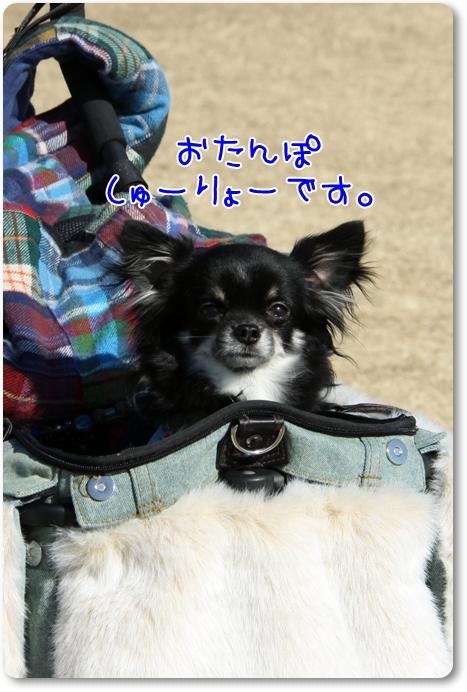 188_20110204183437.jpg