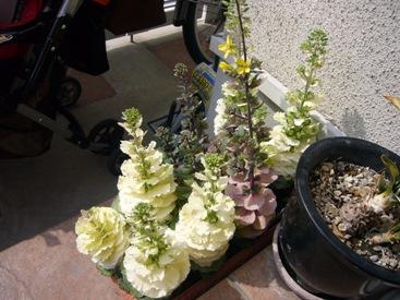 優花お花見3
