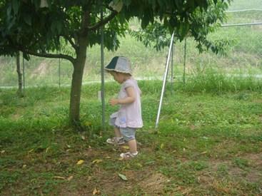 優花と桃の木2
