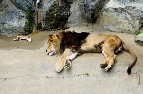 kamine_lion090504.jpg