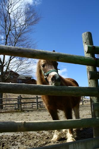 kirara_pony.jpg