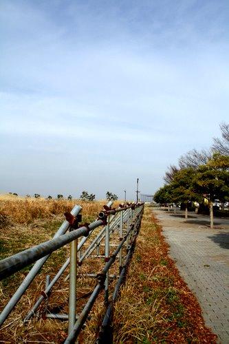 shinkoutyou0812.jpg
