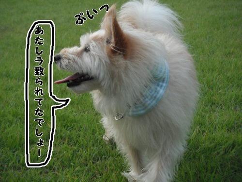 DSCF8742.jpg