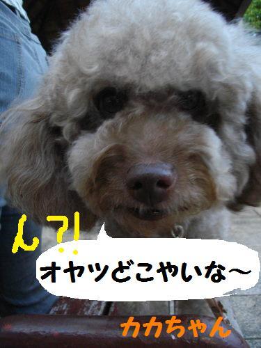 IMGP1141.jpg
