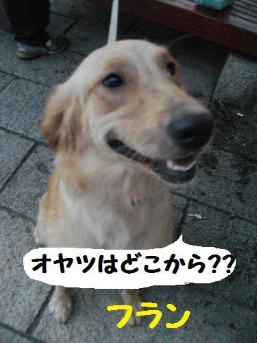 IMGP1168.jpg