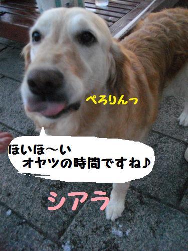 IMGP1169.jpg