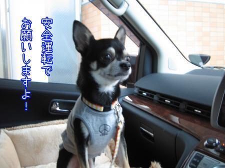 ブツクサ犬1