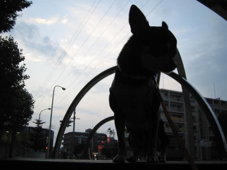ブツクサ犬2