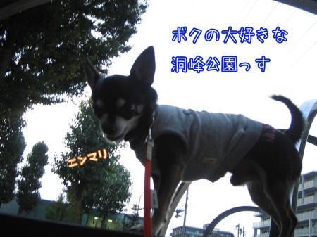ブツクサ犬3