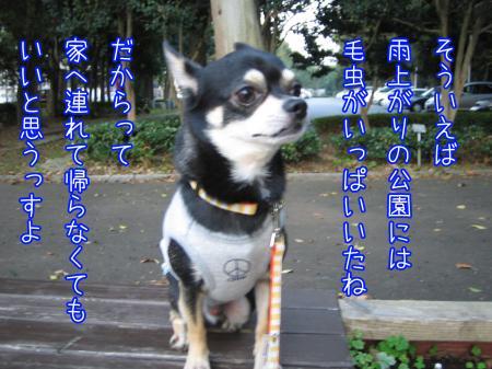 ブツクサ犬4