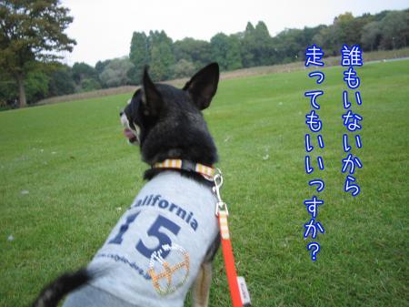 ブツクサ犬5
