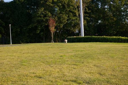 犬のいる風景2