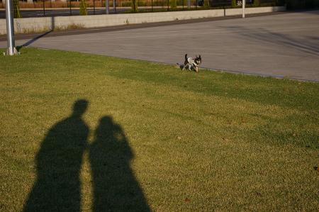 犬のいる風景3