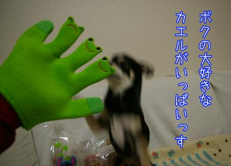 カエル三昧4