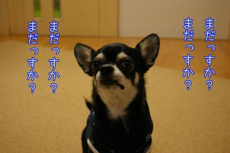 グルメ犬1