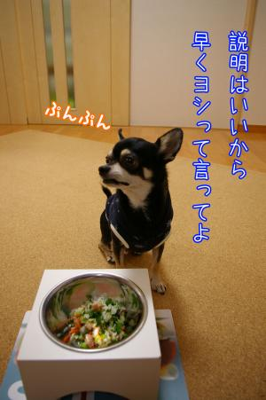 グルメ犬4
