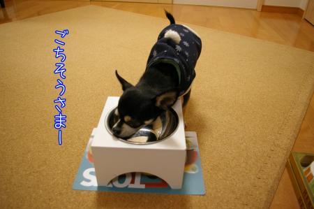 グルメ犬7