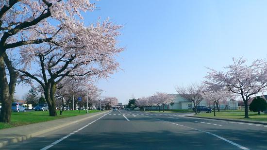 sakura3_20090430183648.jpg