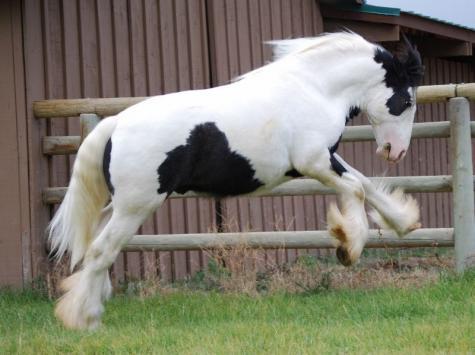 牛のような馬