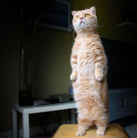 直立不動なネコちゃん「何があったんだ?」