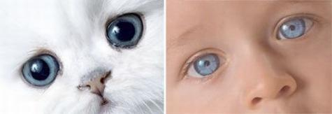 ネコちゃんと赤ちゃんが同じような行動をしている写真