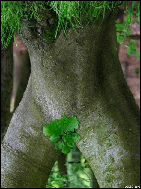 sexy_tree.jpg