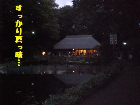 CIMG3462_20081011203124.jpg