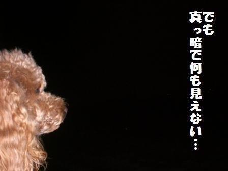 CIMG3526_20081013222811.jpg