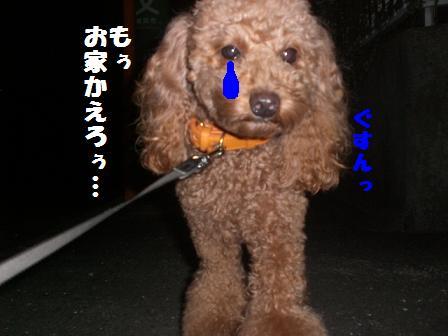 CIMG3535_20081013222826.jpg