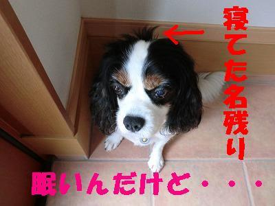 CIMG0811.jpg