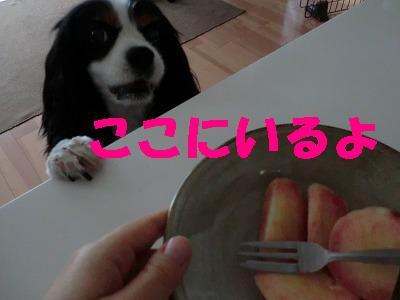 CIMG0829.jpg