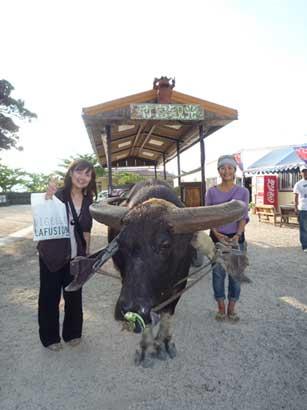 沖縄さ~水牛