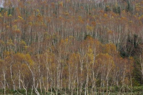 志賀高原 白樺山2008秋