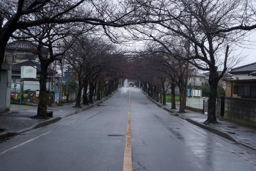 桜道 二和道 2008 冬