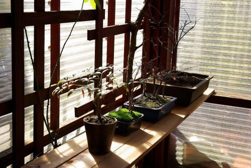 盆栽棚を作ってみた