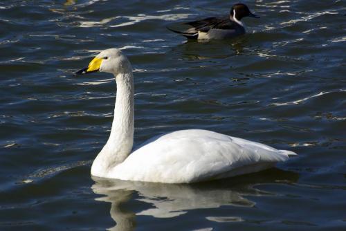 白鳥2射水口