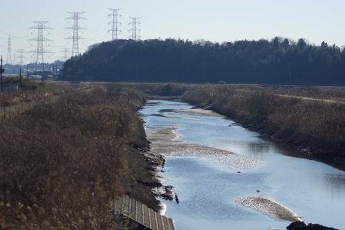この神崎川でガチョウを発見