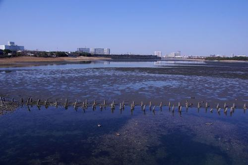 今日の谷津干潟は引き潮で人は多かった