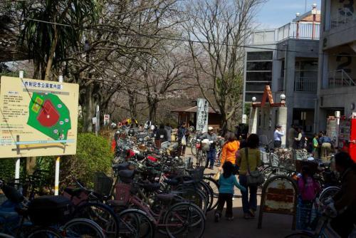 鎌ヶ谷 市制公園 桜 2009 春 込み具合