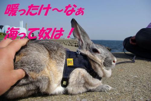 コピー ~ ブンちゃん初めて海に行く編2009春