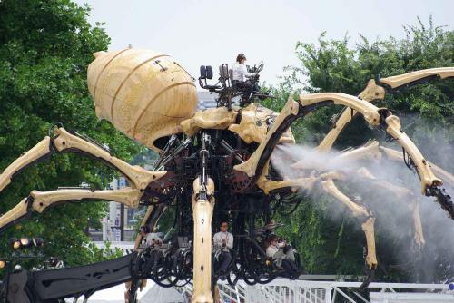 IMGP1061蜘蛛