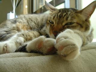 寝てるのニャ・・・。