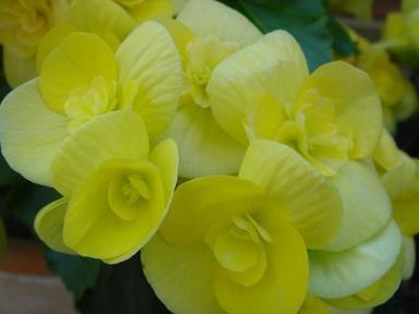 黄色も綺麗(≧▽≦)♪