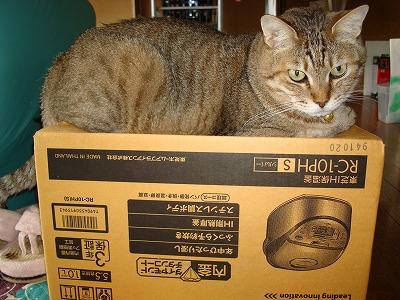 箱でいいもん