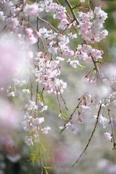 2011久喜青葉公園005