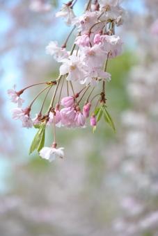 2011久喜青葉公園006
