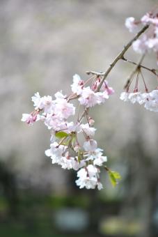 2011久喜青葉公園007